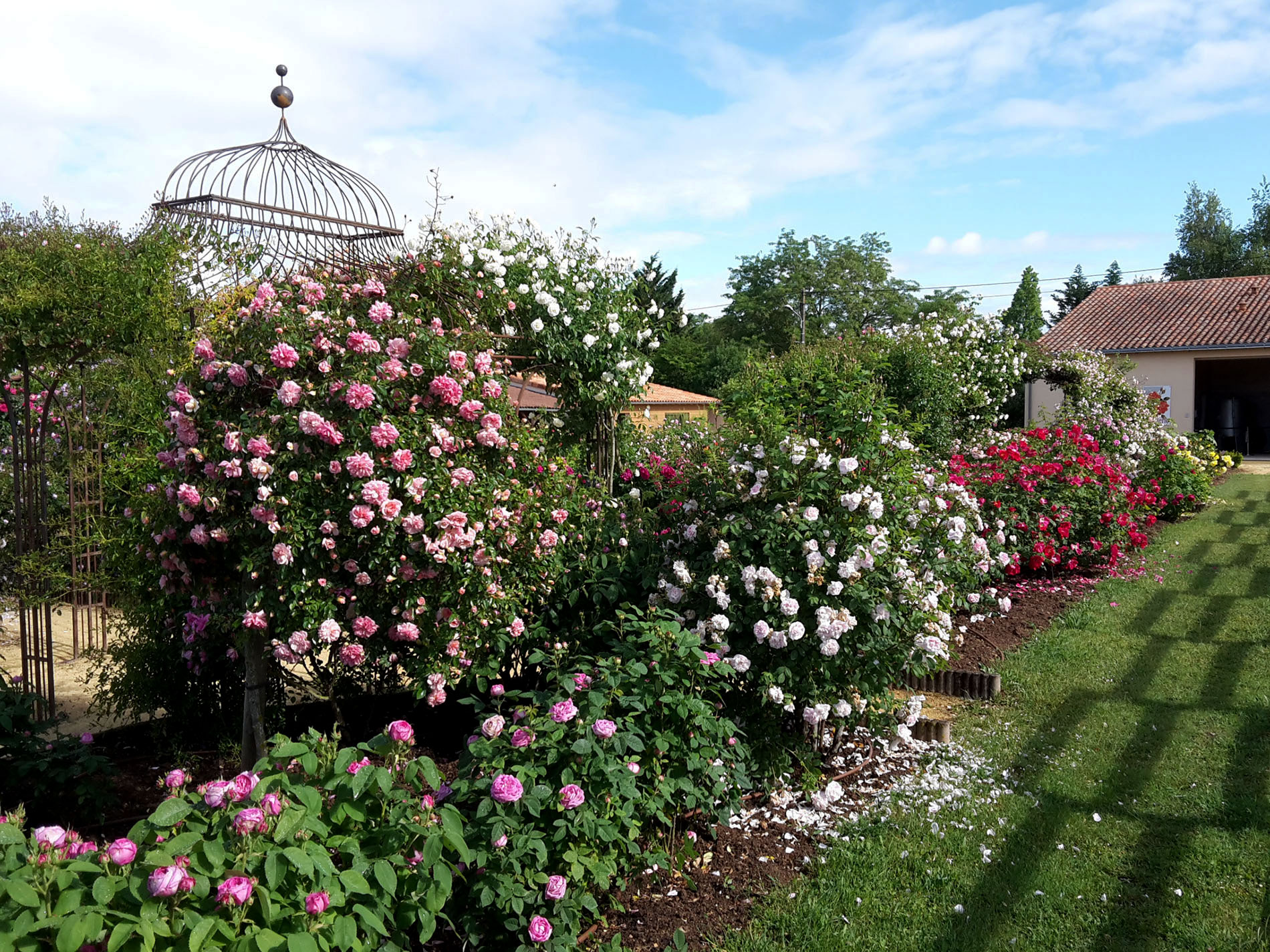 The Rose Garden : Visit the Rose Garden of Rose Land - Sightseeing