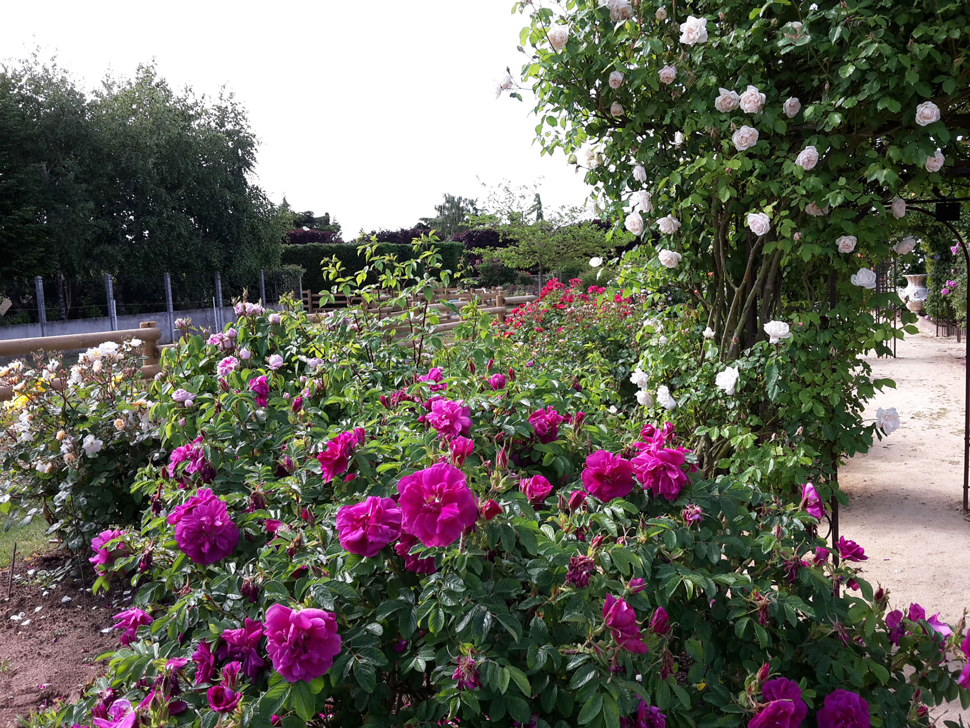 Roses of all the colors of Terre de Rose