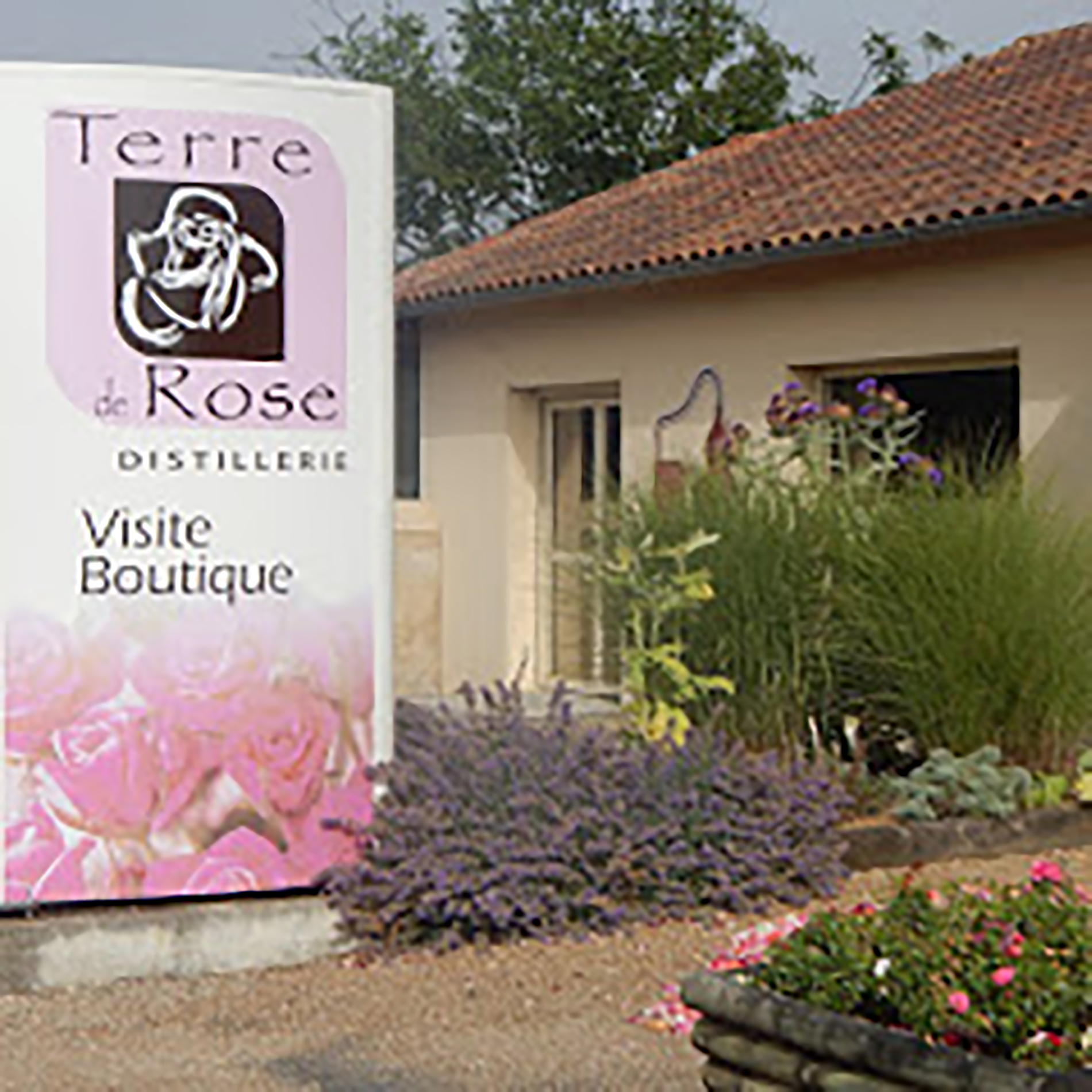 The shop of Terre de Rose : Buy Rose products!