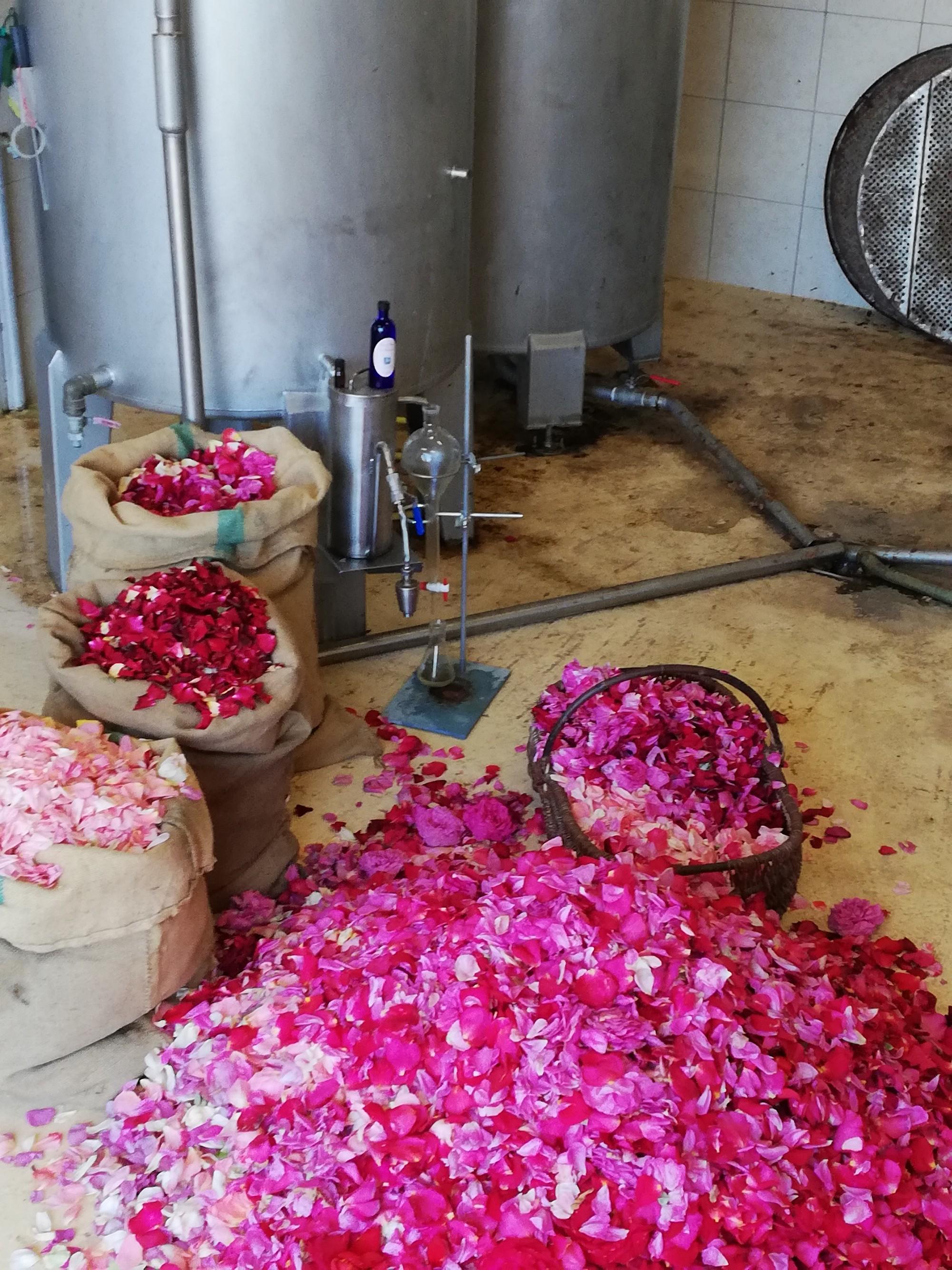 Les pétales de roses de Doué-la-Fontaine